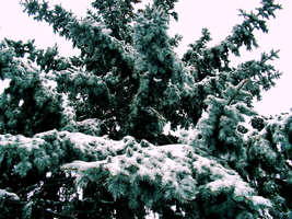 Branches of the Pine by TheChainedIdiot
