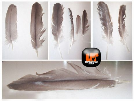 Feather Stock by Unrestricted-Stock