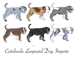 ON HOLD - Catahoula Leopard Imports by RiverFall-Industries