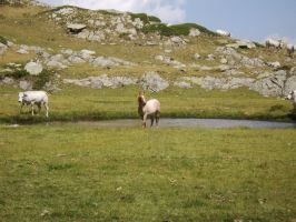 Horse and cows near the lake of vacca (cow) by FraterSINISTER
