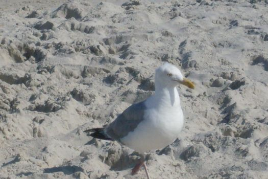 A Little Seagull by jsoccer22