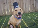 Dog in a Top Hat by BAmber-Michelle
