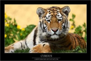 Curious by AF--Photography