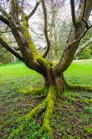 Fairy Tree Stock by little-spacey