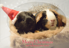 A Christmas wish from my Guinea pigs! by SynxEnq