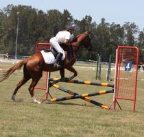 STOCK Showjumping 388 by aussiegal7