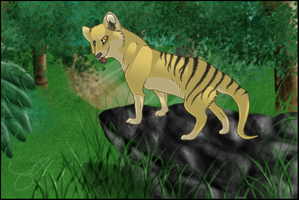 Thylacine by paracritter