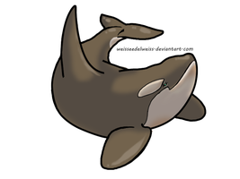 Cappuccino/Antartctic Orca Biology: A Guide by WeisseEdelweiss