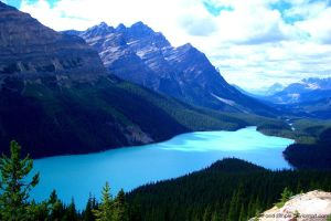 Lake Peyto by Pure-and-Simple