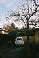 VW Bug and The Tree by lykesorad