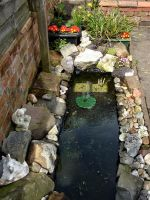 My pond long view by Thelma1