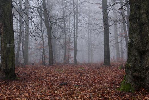 Foggy Forest 26 by sacral-stock