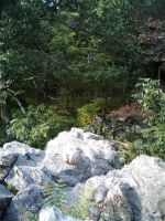 forest and rocks by kamesen