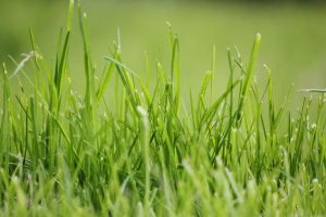 The grass.. by Dodephine