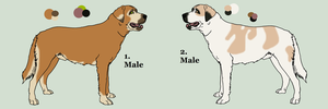 Anatolian Shepherd Dog Adopts by Pink-Monsterz