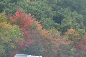 2014 Natural Autumn Color 15 by Miss-Tbones
