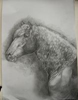 Horse head study 2 Nov2010 by howlinghorse