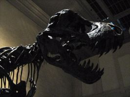 Things from DC: TRex by Killbot-Beauty