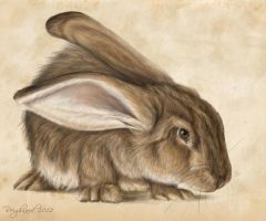 Rabbit Study by Reighnard