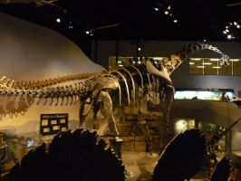 Raptor and the museum of ancient life 39 by Sting-raptor