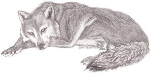 Sleeping wolf by yoko-lauren