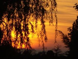 Autumn Sunset Willow by Tokio-Hotel-Mad