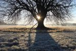 frosty shadow play by MT-Photografien