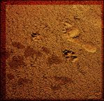 Footprints in the sand by aglezerman
