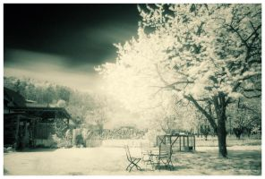 The Infrared Garden by DREAMCA7CHER