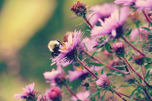 Fall Asters by karcharos