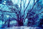 Spooky tree stock by CathleenTarawhiti