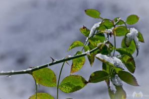 First Snow I by DimensionalImages
