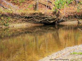 Brush Creek Roots by GlassHouse-1