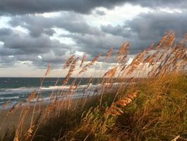 ''Sunset Beachgrass'' by ZNINJA5000