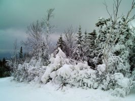 Snow Covered Trees 3 by DerpyDash64