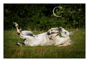 What to do a warm Summer Day by Colourize