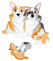 Corgi litter 1 by transfanatic