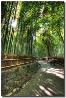Bamboo forest path 1 by dragonslayero
