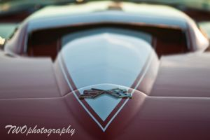 Stingray by TWOphotography