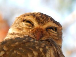The Sleepy Little Owl by seek-and-hide