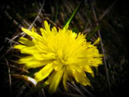 The Dandelion by wittch