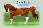 CF Sentri by JNFerrigno