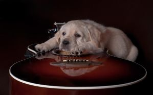 dog and guitar by Yadira3