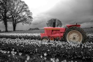 Little Pink Tracktors BW by danporter