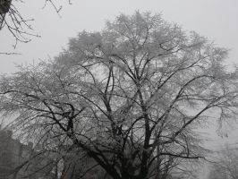 Frozen tree by Severius