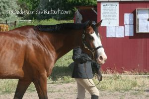 Quarter Horse Stock 41 by tragedyseen
