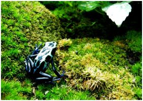 Frog by shawn529