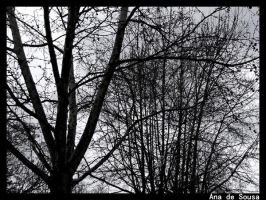 Two Trees by anadesousa