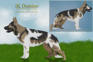IK Domino by InTENsity-Kennels