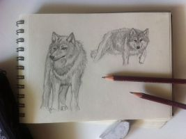 wolves sketches I by monniponi